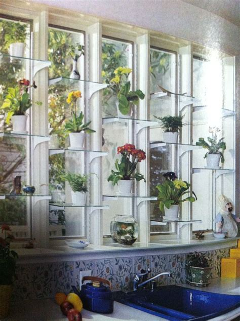 orchids on pinterest window shelves glass shelves and kitchen windows