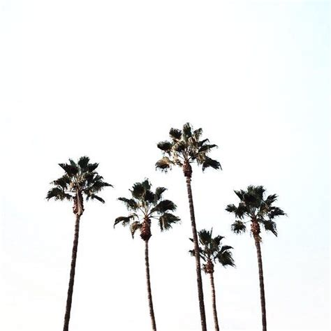 summer vibes palm trees hd 179 best so many palms so little time images on pinterest