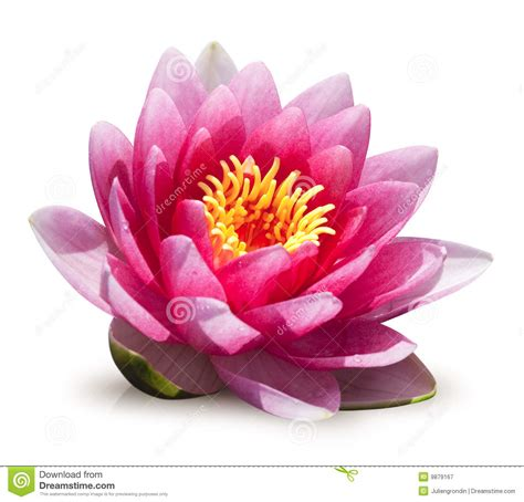 Läuse An Blumen 4425 by Water Flower Royalty Free Stock Photography Image