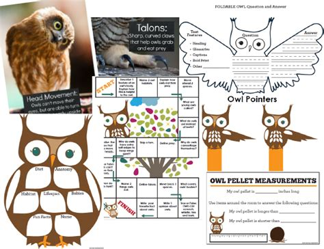 hoot book report owls are a hoot an informational text study