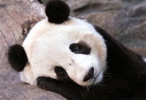 imagenes asombrosas de animales image gallery imagenes de animales