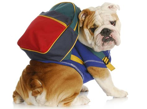 school for dogs back to school time essential skills to teach your the pet nanny