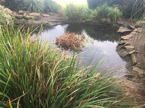 barnhill rock garden barnhill rock garden dundee aktuelle 2017 lohnt es sich