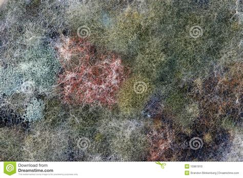 what color is mold various colors of mold stock photo image 15961910