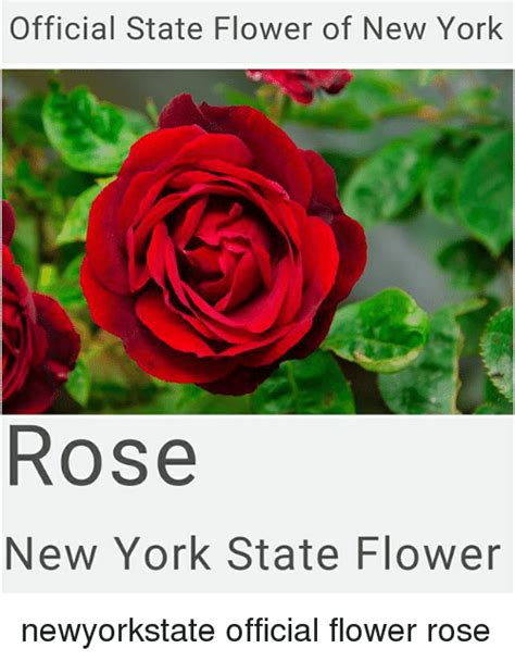 Images Of New York State Flower