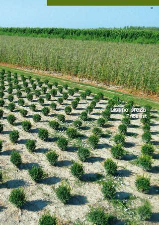 listino prezzi piante da giardino 1 listino piante da abies alba a betula pendula by vivai