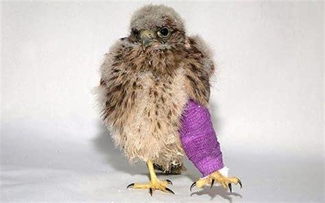 animal help birds