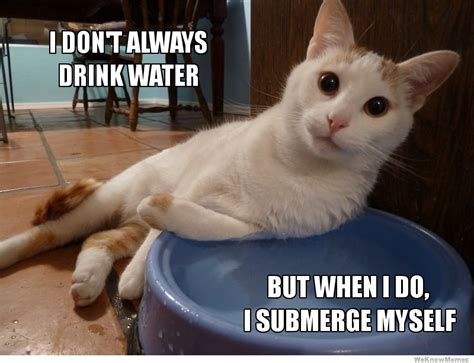 Drinking Water Meme - funny drink more water memes
