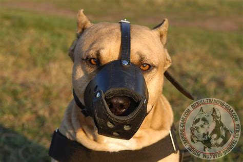 muzzle for pitbull get anti barking leather pitbull muzzle