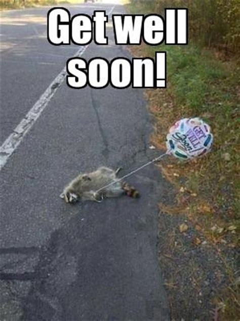 Funny Get Well Meme - get well soon raccoon flickr photo sharing