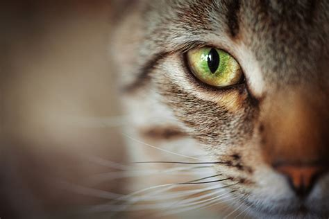 do cats see in color petset a website for humans and their best friends