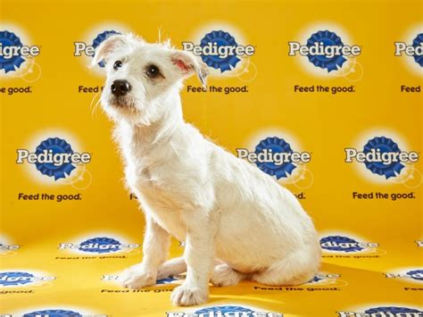 puppy planet meet the adorable rescues in the national puppy bowl culturemap