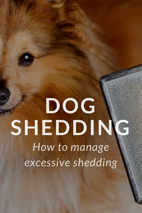 Shedding Excessively by 25 Best Ideas About Shedding On Cat