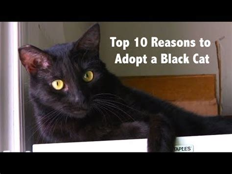 Top 10 Reasons To Adopt A by Top 10 Reasons To Adopt A Black Cat