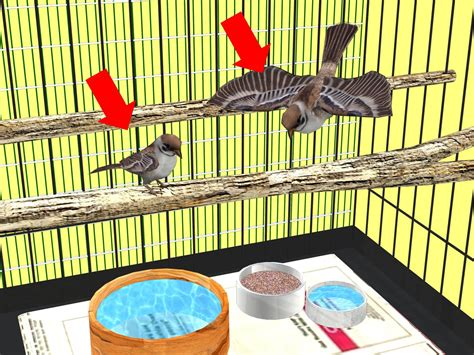 how to make a bird cage from a dog cage 8 steps with