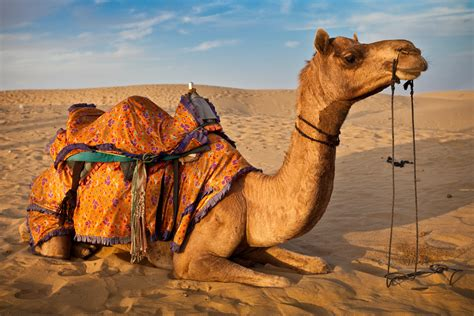 thar desert animals rajasthan tour packages