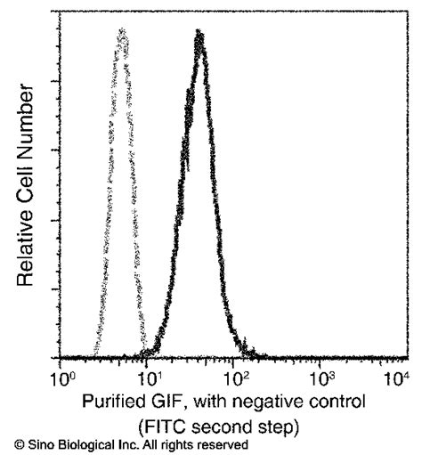 r protein and intrinsic factor human gastric intrinsic factor gif antibody sinobiological