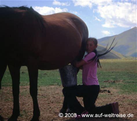 schafe beim decken wenn die herde zieht zu pferd zwischen song kul und
