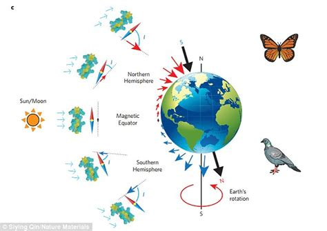 Special Tirai Magnet Bird Termurah magnetic compass helps pigeons find their way and humans it daily mail