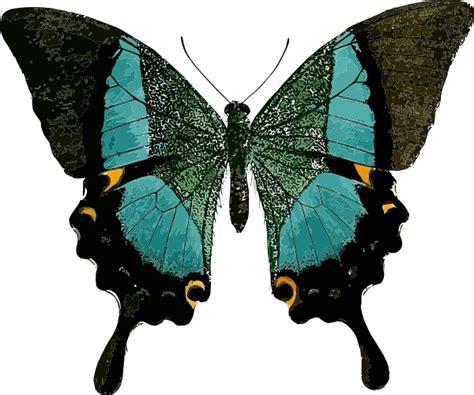 Dasi Gambar Gitar By Papillon vector butterfly 171 frpic