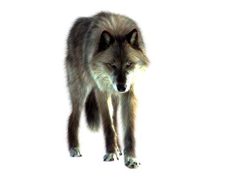 imagenes png animales imagenes png para tus post taringa