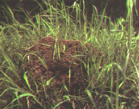 Gelbe Ameisen Im Garten 3820 by Nestarten