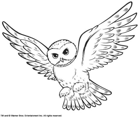 harry potter coloring book hedwig hedwig harry potter s owl coloring page summer 9404
