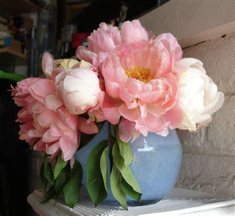 peonies in vase pink peonies in blue vase pyrography by grace matthews