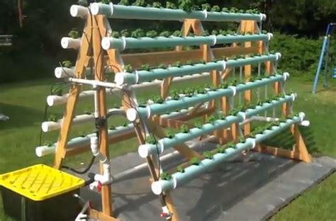 frame vertical hydroponic garden grows  plants
