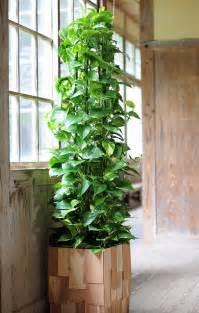 Pole Trellis 画像 一人暮らしの 観葉植物のアレンジ レイアウト例まとめ 部屋でもできそう Naver まとめ