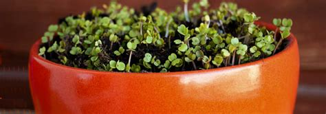 coltivare goji in vaso hello world