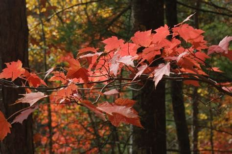 mn dnr fall colors minnesota dnr s fall color finder cities outdoors