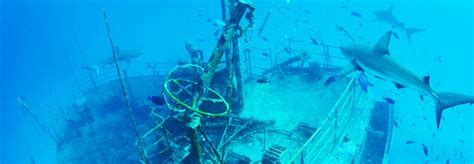 Wreck Dives   The Official Site of The Bahamas