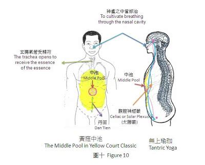 the solar plexus or abdominal brain classic reprint books illustrated yellow court classic huang tingjing tao