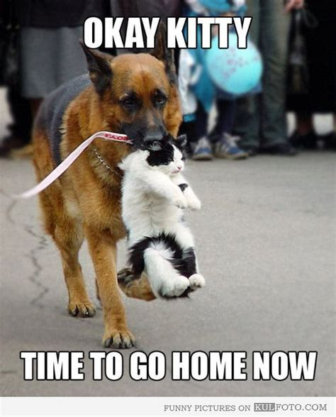 go home now cats cats cats