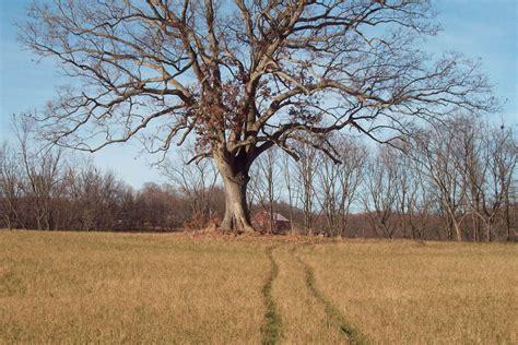 shawshank redemption tree the shawshank redemption the man who wasn t hamlet