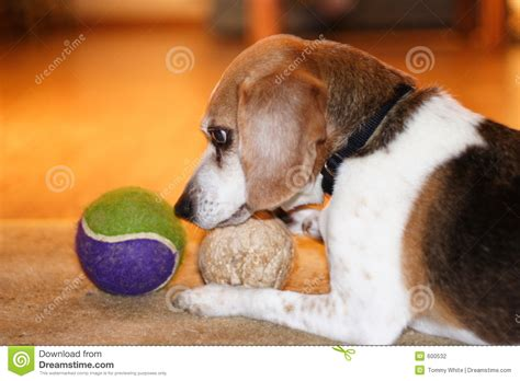 puppy time out beagle time out stock photography cartoondealer 255374