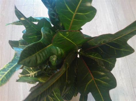 Home Decor Stores Fresno Ca 100 houseplant care 8 keys to 5 tips for growing