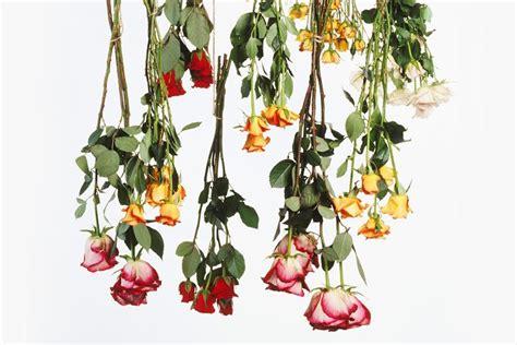 seccare fiori i fiori secchi il bricolage come seccare i fiori