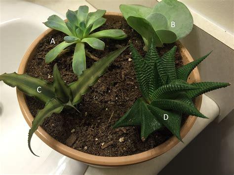 succulent house succulent plants check out the free plant identification