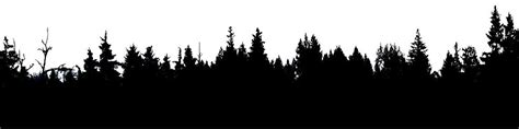 pine clipart tree line pencil and in color pine clipart