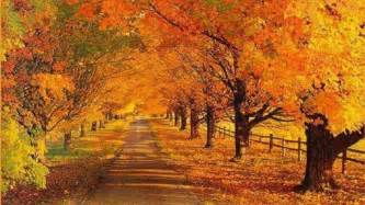 fall landscaping xmwallpapers com wallpaper other landscape autumn road
