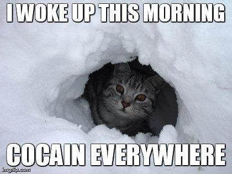 Coke Bear Meme - cocain cat cocaine bear know your meme