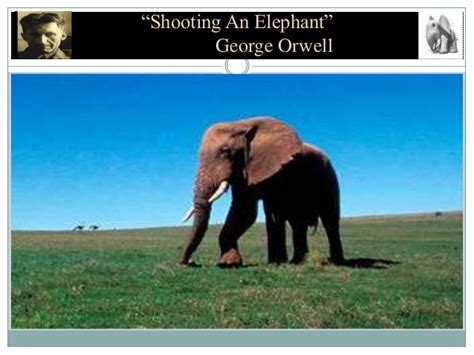 George Orwell Shooting An Elephant Essay by George Orwell Shooting An Elephant Imperialism Essay