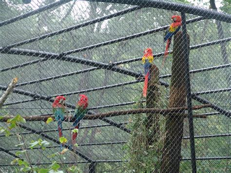 gabbie per pappagalli ara in veneto una voliera per i pappagalli ara
