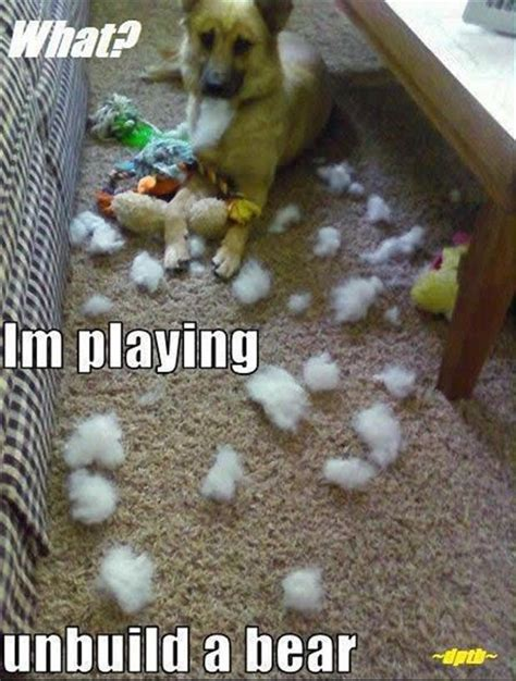 Build A Bear Meme - 30 funny animal captions part 2 30 pics amazing