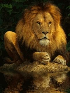 imagenes de leones en movimiento 3d animales gif con movimiento imagenes telefonos m 243 viles