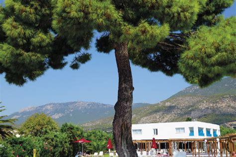 Exceptionnel Creer Un Jardin Mediterraneen #8: PIN-JARDIAISNE.png