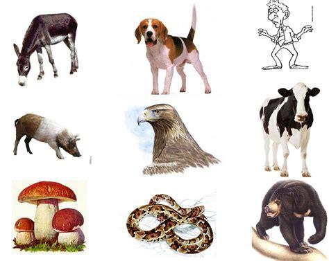 imagenes animales carnivoros herviboros omnivoros animales carnivoros herbivoros y omnivoros