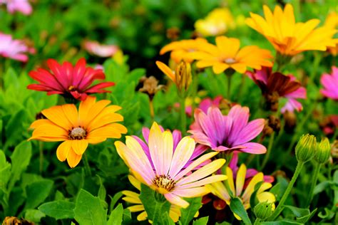 images of flowers wallpaper flowers colorful hd 5k flowers 5999